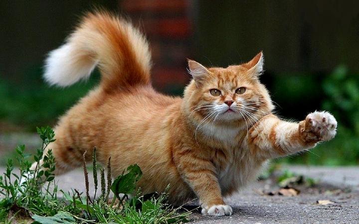 Beautiful-Cat-cats-16096437-1280-800_beautiful-cats